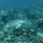 Turtles were visible on lots of the dives, this one came to the divers!