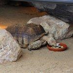 Schildpadden werden net gevoerd.