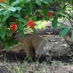 resident animals