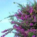 Beautiful flowers and blue sky.