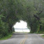 View to drive toward Big Oak at Goose Island