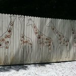 The wall leading to the giraffe enclosure
