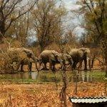 elefanten direkt am Camp