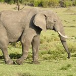 Elephant spotting .....