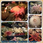 Collage of the touch tide pools