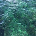 Sea Lice