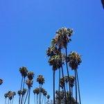 Mission beach palm trees