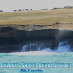 grazing peacefully Atlantic Shores Riding Stables