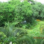 Hotel grounds- view from balcony