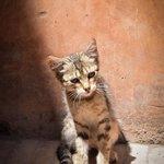 Cat at Saadian Tombs