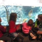 Fish Tank @ Aquarium before the dolphin debacle!