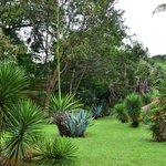 Голубая агава и другие