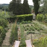 Owner's vegetable garden
