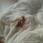 I found this roach crawling on my suitcase