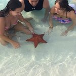 Starfish named Patty