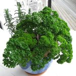 warm touch of herb plant on balcony table