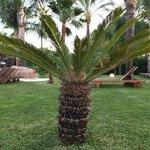 Family pool - mini palm trees