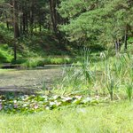 """water lilies on the """"little pool"""" on walk round the Blue Pool"""