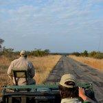 En routeb pour le safari