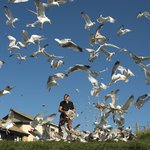 Seagull breakfast