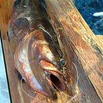 ORFOZ Fish 6 kg