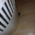 visita inesperada cucaracha