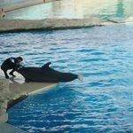 coccole ai delfini