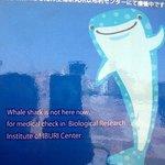 Le requin baleine est parti consulter
