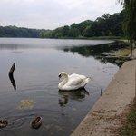 Swan Lake in High Park!