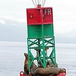 Bouy with seals and eagle