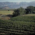 San Luis Obispo Wine Region