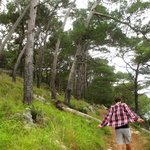 Cikat forest