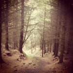 Dalby forest, for those who love the great outdoors