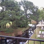 Deck, Stream with Turtles, Ducks and Birds