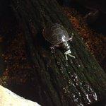 New baby turtle