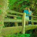 Several picturesque wooden bridges