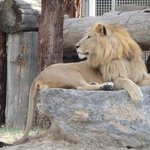 King of the zoo, of course