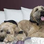 Pet Friendly: Dogs in Chicago Hotel