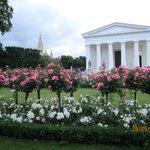 Парк, розы