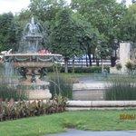 Парк,розы
