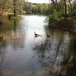 Lake in the Biltmore Gardens