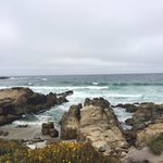 Bird Rock hunt course at 17 mile drive