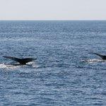 2 Whale's flukes