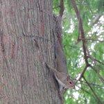 Este esquilinho lindo corria de um lado pro outro no jardin do hotel!