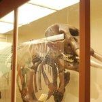 The Harvard Mastodon