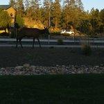 elk in grounds