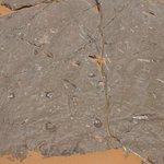 cantera de fósiles petrificados