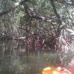 Mangrove tunnel