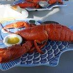 SL Lobster