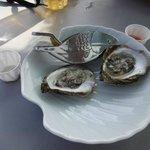 SL Oyster